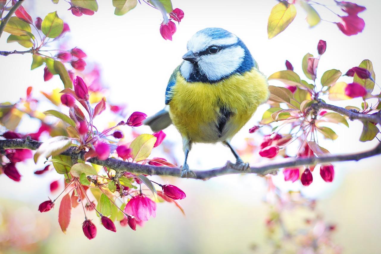 wiosenny-ptaszek